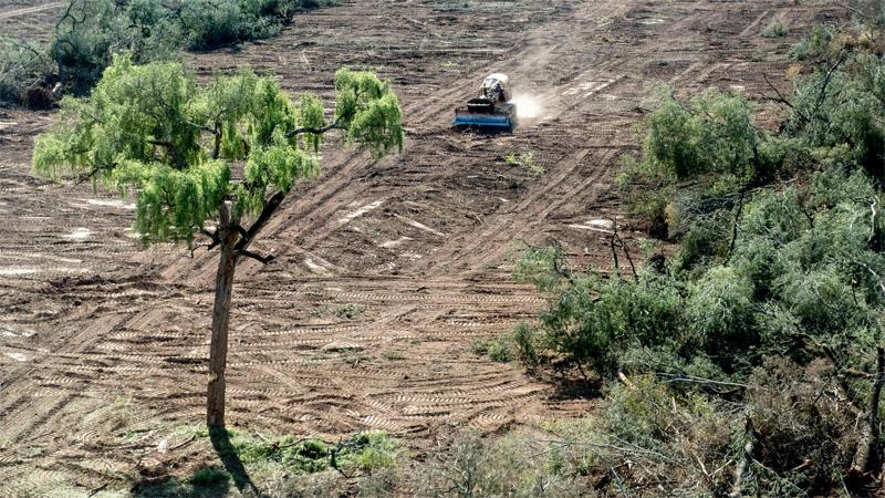 En sólo seis meses se desmontaron más de 45 mil hectáreas en el norte del país
